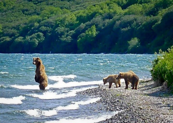 Kamchatka pays des ours et des volcans - X_2329