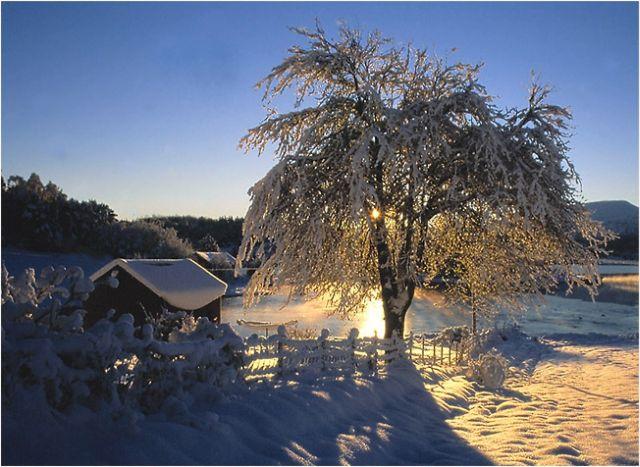 Beauté hivernale * X_2337