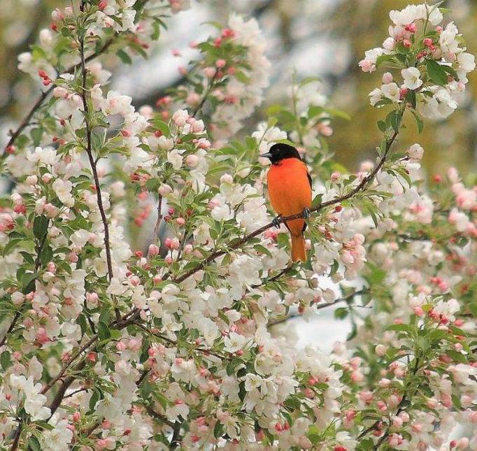Bonjour printemps - Page 2 X_2357
