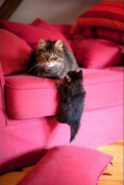 Les chats - nos petits compagnons - Page 11 X_23712