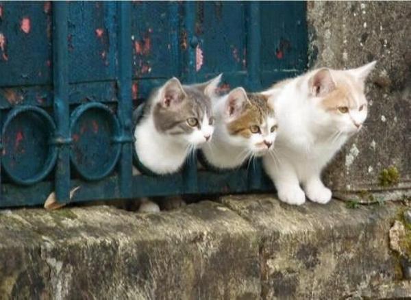 Les chats - nos petits compagnons - Page 11 X_24012