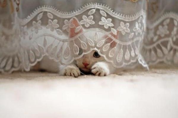Les chats - nos petits compagnons - Page 11 X_24111