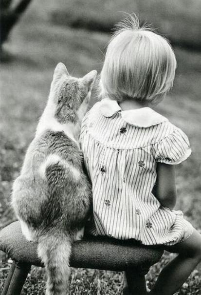 Les chats - nos petits compagnons - Page 11 X_24212