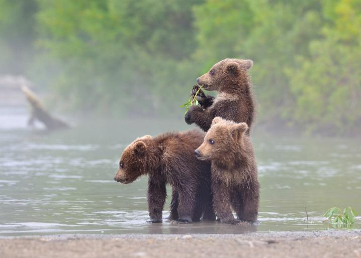 Kamchatka pays des ours et des volcans - X_2426