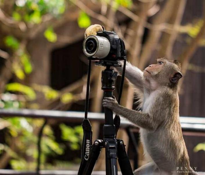 Bravo aux photographes * X_2440