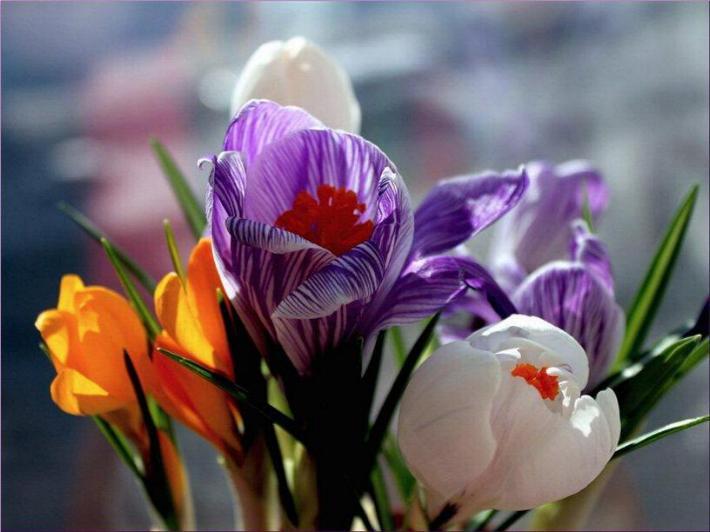 Bonjour printemps* X_2557