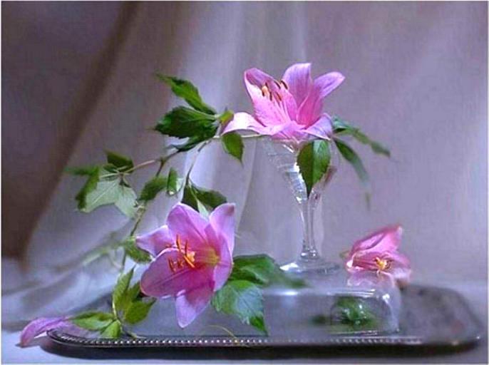 Symphonie florale * - Page 2 X_2751