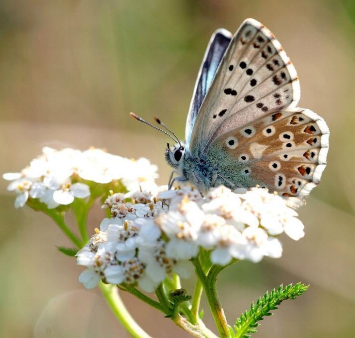 Merveilles de la nature - les papillons - - Page 2 X_2817