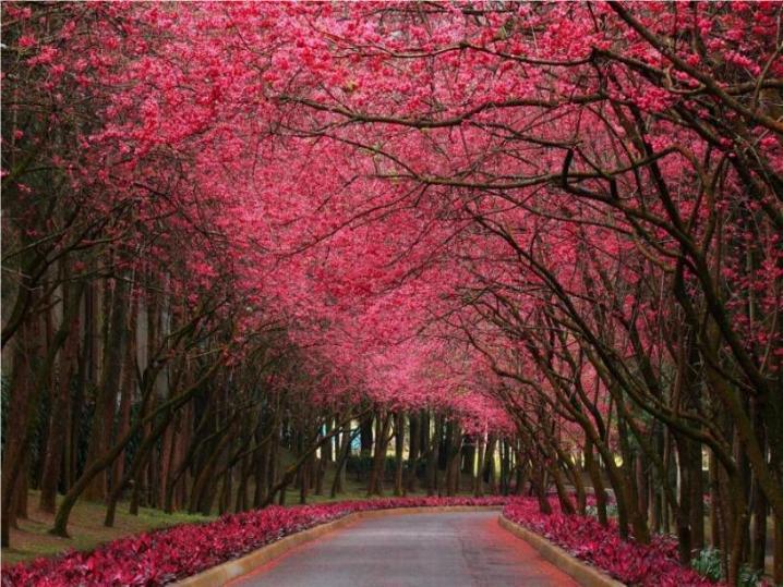 Bonjour printemps* X_2851
