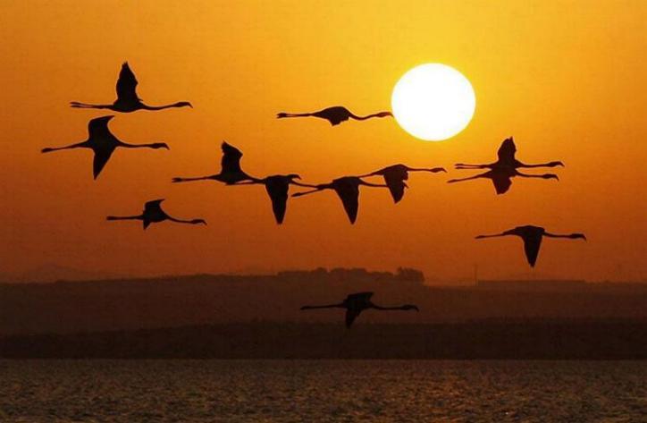 Couchers de soleil - magnifique !!! * X_2954