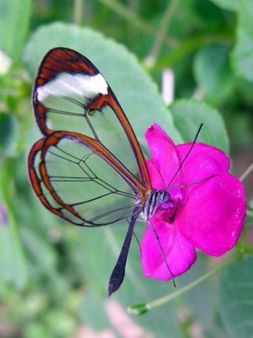 Merveilles de la nature - les papillons - - Page 2 X_3018