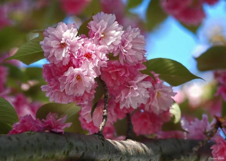 Bonjour printemps - Page 2 X_3143