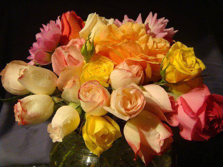 Symphonie florale * - Page 2 X_3240