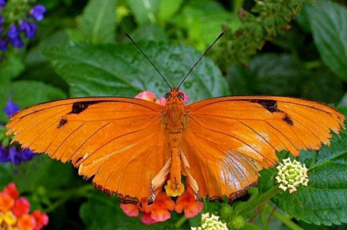 Merveilles de la nature - les papillons - - Page 2 X_3417