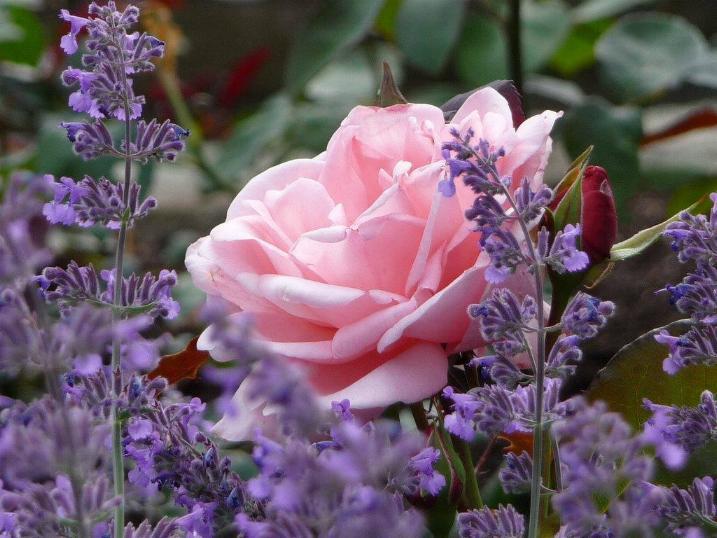 Symphonie florale * - Page 2 X_3438