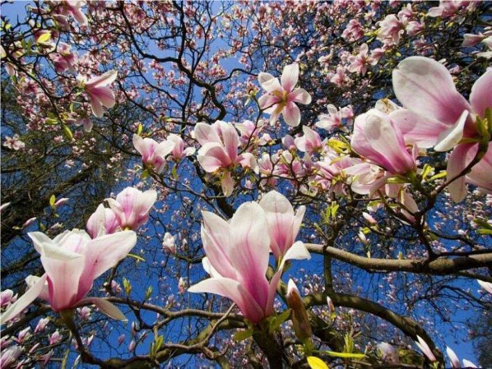 Bonjour printemps - Page 2 X_3536