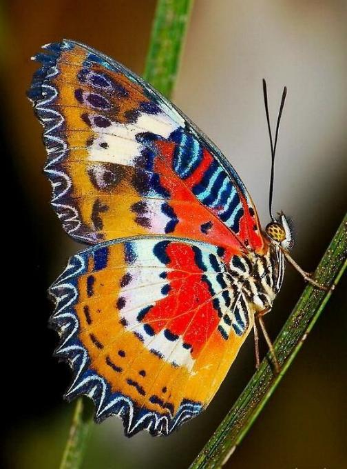 Merveilles de la nature - les papillons - - Page 2 X_3618
