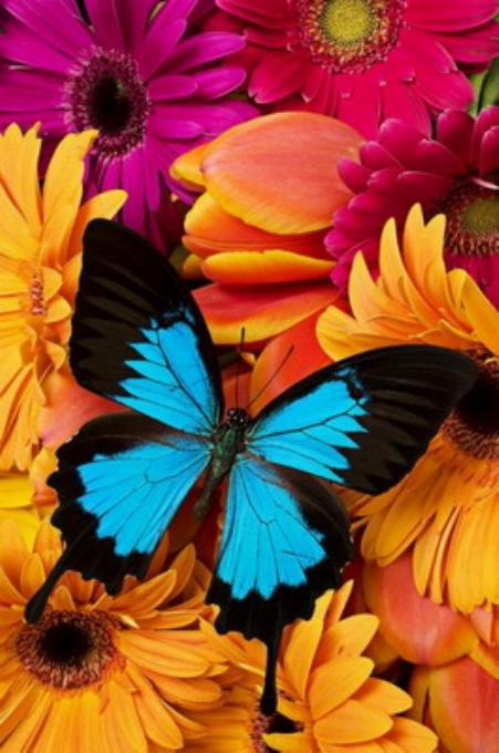 Merveilles de la nature - les papillons - - Page 2 X_3816