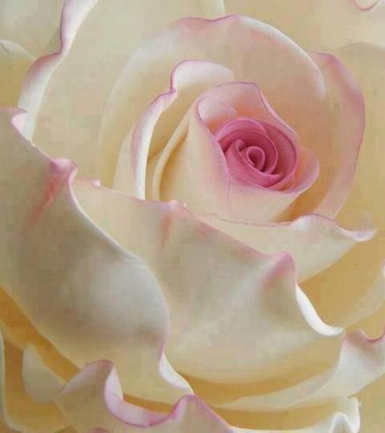 Symphonie florale * - Page 2 X_3832