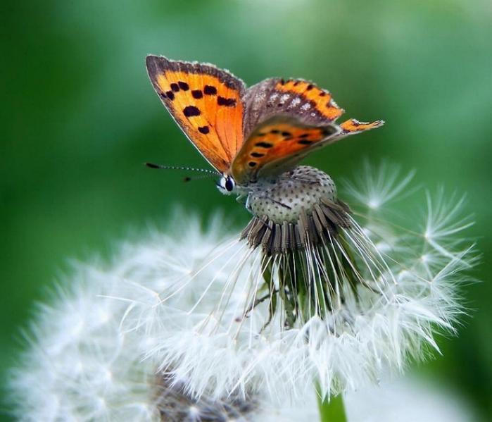 Merveilles de la nature - les papillons - - Page 2 X_3915