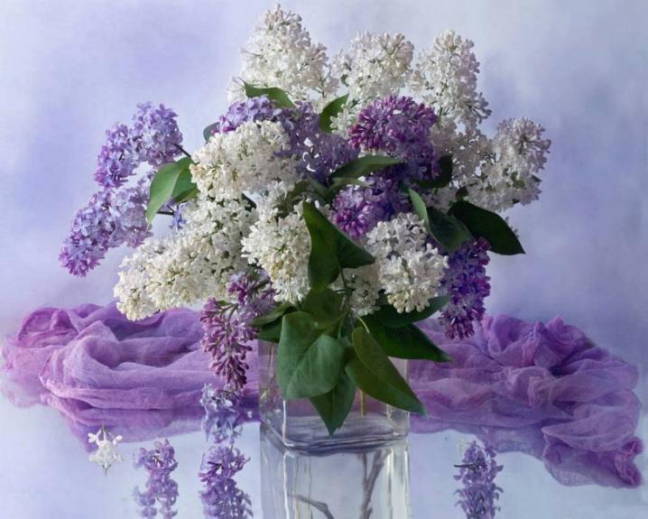 Symphonie florale * - Page 3 X_3933