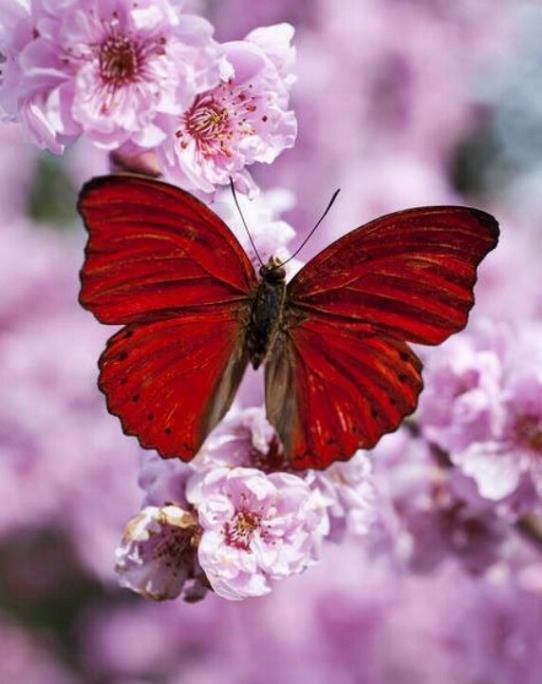 Merveilles de la nature - les papillons - - Page 2 X_4015