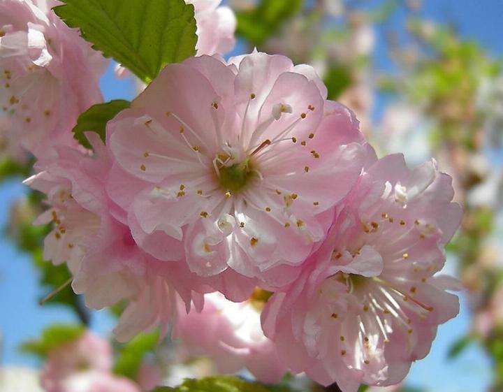 Bonjour printemps - Page 2 X_4033