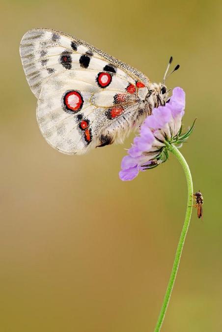 Merveilles de la nature - les papillons - - Page 2 X_4116