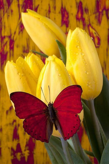 Merveilles de la nature - les papillons - - Page 2 X_4416