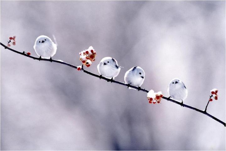 Pour le plaisir des yeux  - magnifiques photos - Page 20 X_46010