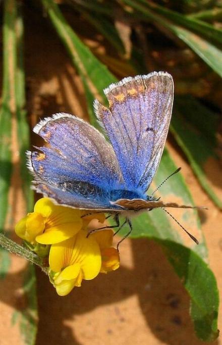 Merveilles de la nature - les papillons - - Page 3 X_4613