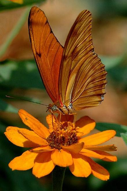 Merveilles de la nature - les papillons - - Page 3 X_4816