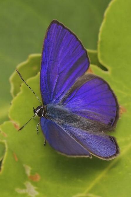 Merveilles de la nature - les papillons - - Page 3 X_4916