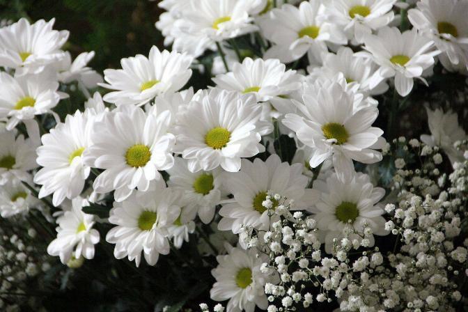 Symphonie florale * - Page 2 X_4923