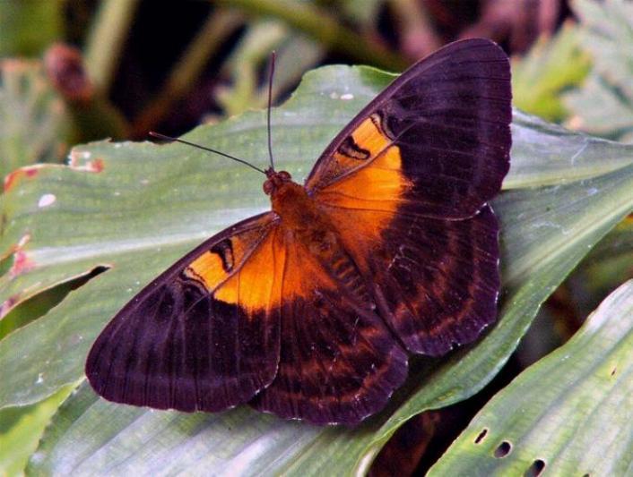 Merveilles de la nature - les papillons - - Page 3 X_5214