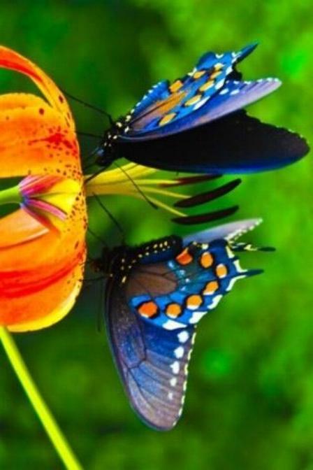 Merveilles de la nature - les papillons - - Page 3 X_5713
