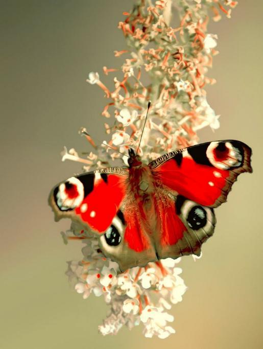 Merveilles de la nature - les papillons - - Page 3 X_6213