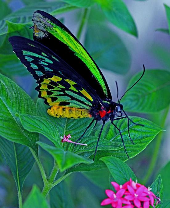 Merveilles de la nature - les papillons - - Page 3 X_6513