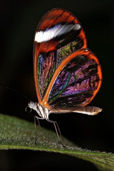 Merveilles de la nature - les papillons - - Page 3 X_6713