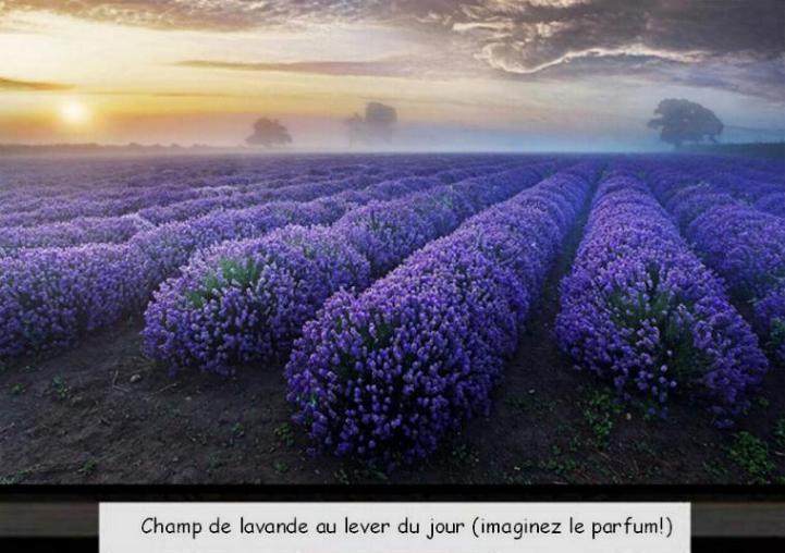 Pour le plaisir des yeux  - magnifiques photos - Page 21 X_67410