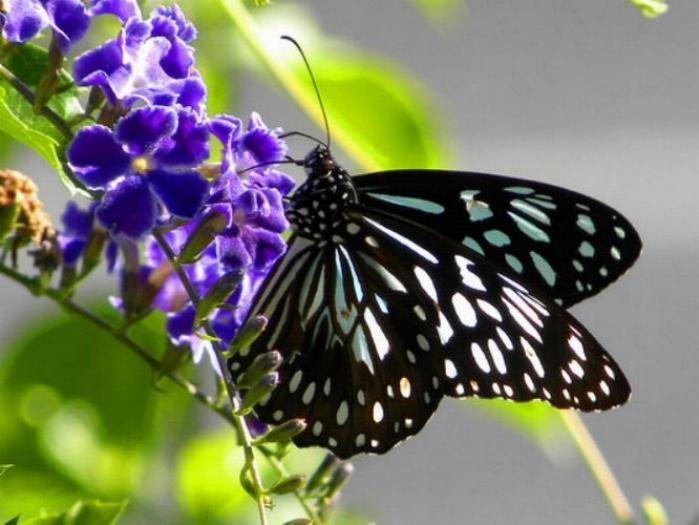 Merveilles de la nature - les papillons - - Page 3 X_6914