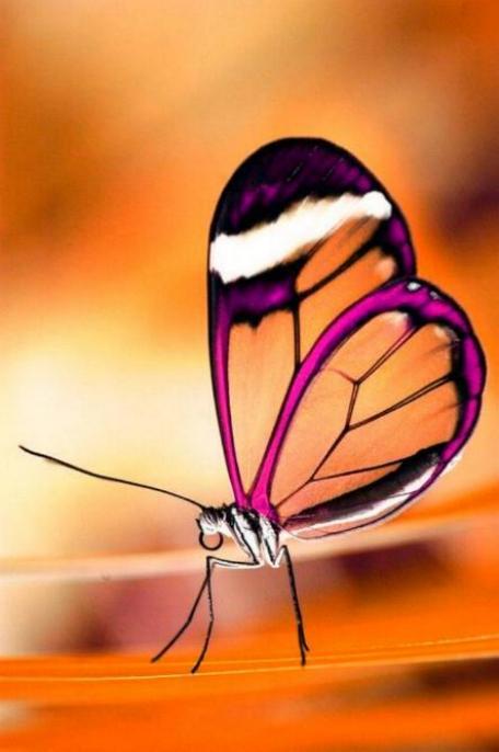 Merveilles de la nature - les papillons - - Page 4 X_7214