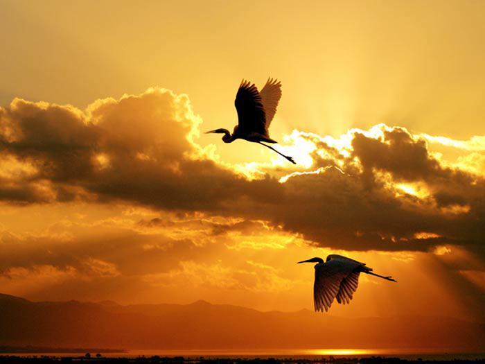 Les oiseaux du monde * - Page 4 X_7511