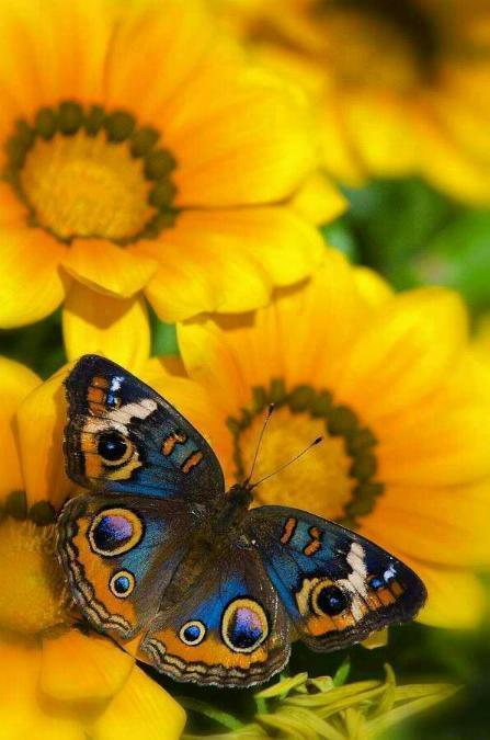 Merveilles de la nature - les papillons - - Page 4 X_7612