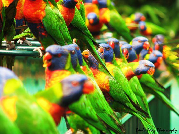 Les oiseaux du monde * - Page 4 X_7711