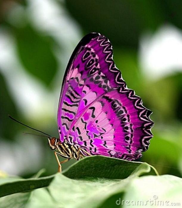 Merveilles de la nature - les papillons - - Page 4 X_7712
