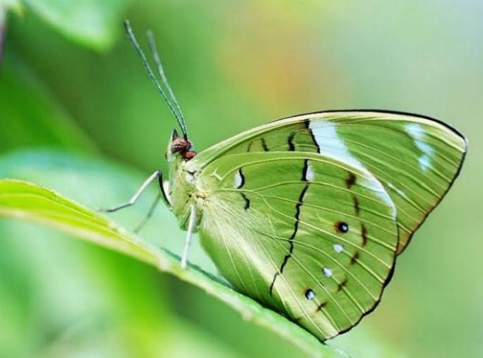 Merveilles de la nature - les papillons - - Page 4 X_7912