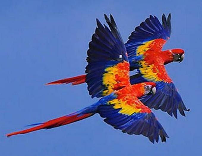 Les oiseaux du monde * - Page 4 X_8011