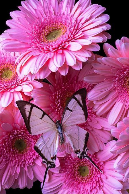 Merveilles de la nature - les papillons - - Page 4 X_8012