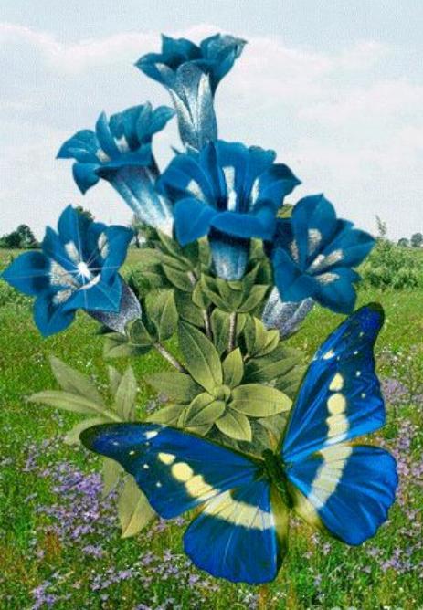 Merveilles de la nature - les papillons - - Page 4 X_8114